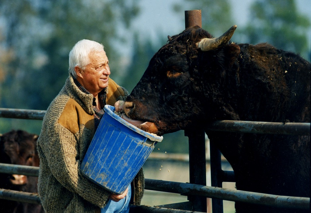 Ariel Sharon, working on his farm, 1996. Photo: Moshe Shai / Flash90