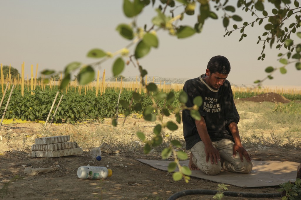 A Palestinian farmer prays in a vegetable field in the West Bank village of Ouja. Photo: Meital Cohen / Flash90