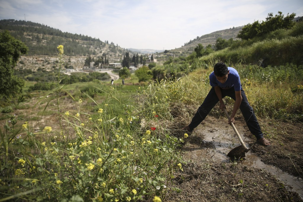 A young Palestinian boy directs a water stream to his family crops in the Palestinian village of Battir. Battir's farmers use an ancient irrigation system that uses man-made terraces dating back to the Roman era in the region. Photo: Hadas Parush / Flash90