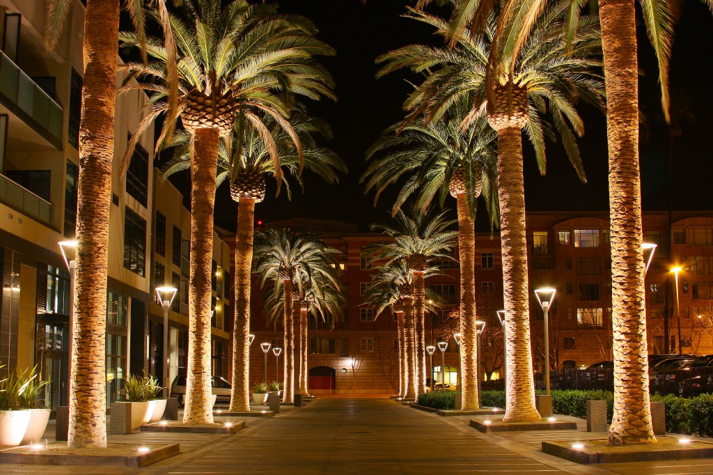 Palm trees in San Jose. Photo: Michael / Wikimedia