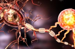 3D-illustration-of-nerve-cells-via-Shutterstock.com_-1168x657