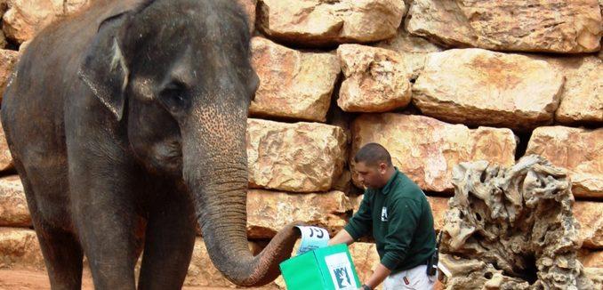 Kommunalwahlen auch im Jerusalemer Zoo