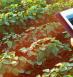 Taranis, Cutting-edge Agricultural Tech